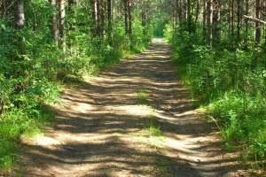 Lue lisää aiheesta Haapakosken luontopolku