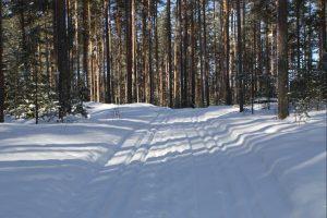 Lue lisää aiheesta Tahiniemen hiihtolatu